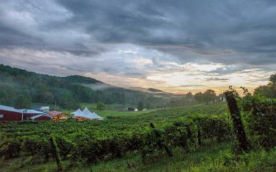 Our 18 Favorite Virginia Wine Pass Deals for 2018